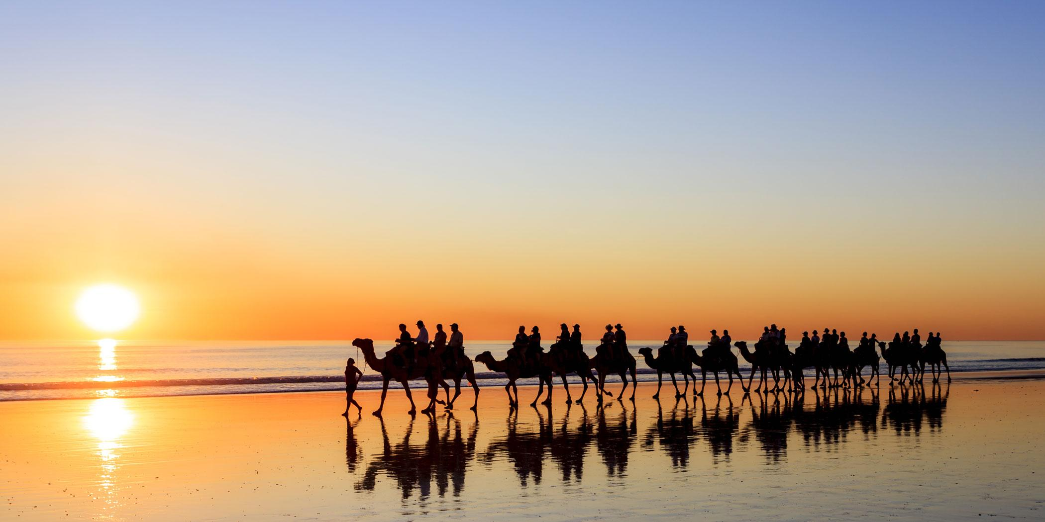 Camels on Cable Beach in Broome Photo: Adobe Stock