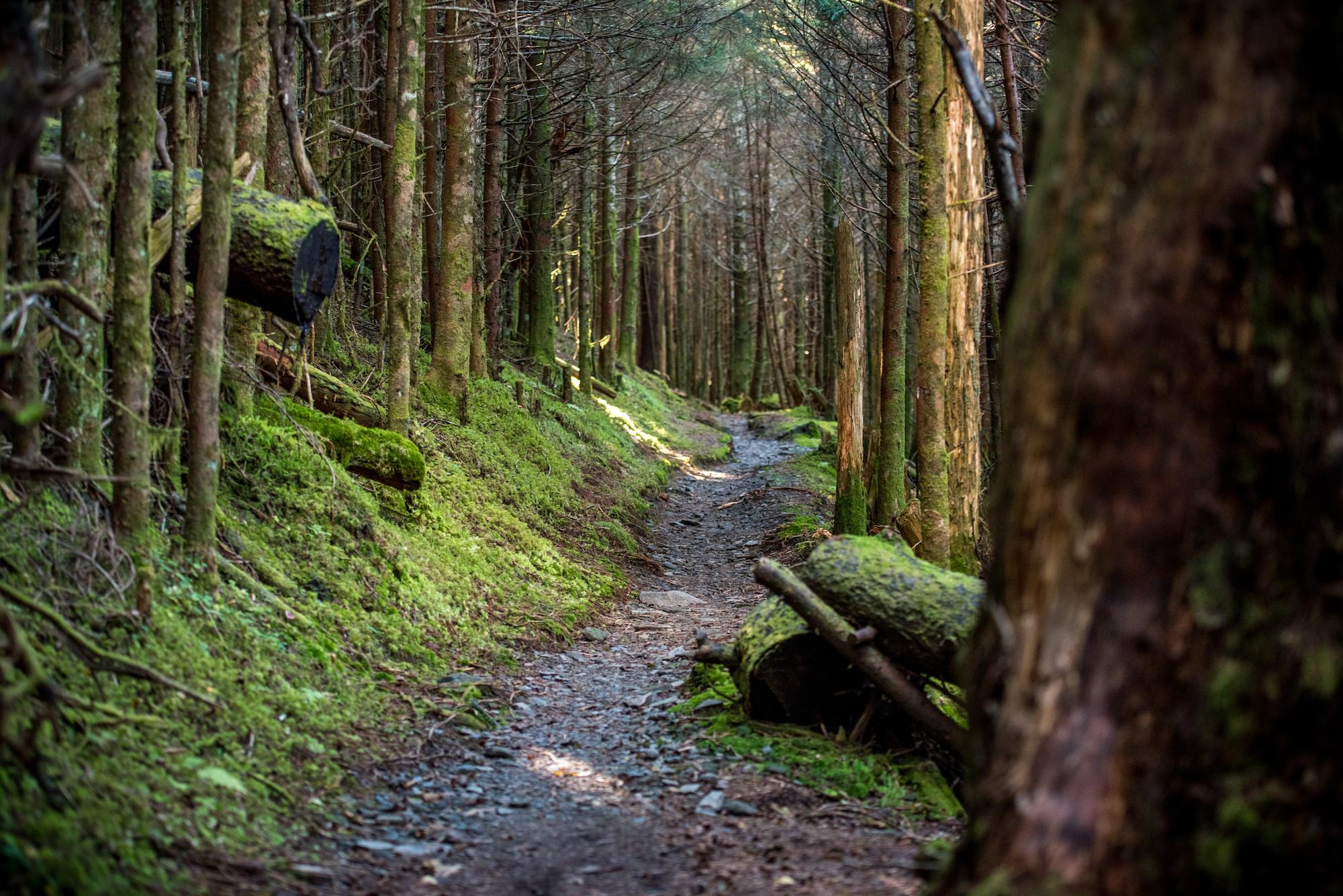 A.T. in Great Smoky Mountains National Park