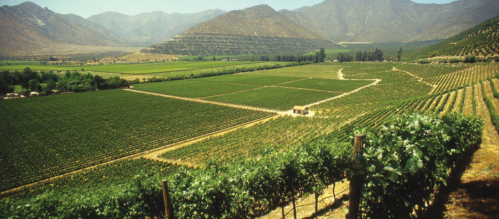 Young, dynamic vintners are producing a wide variety of wines throughout Chile. Some of them rival or surpass anything you'll find in the U.S. (Photo: Bob Ecker)