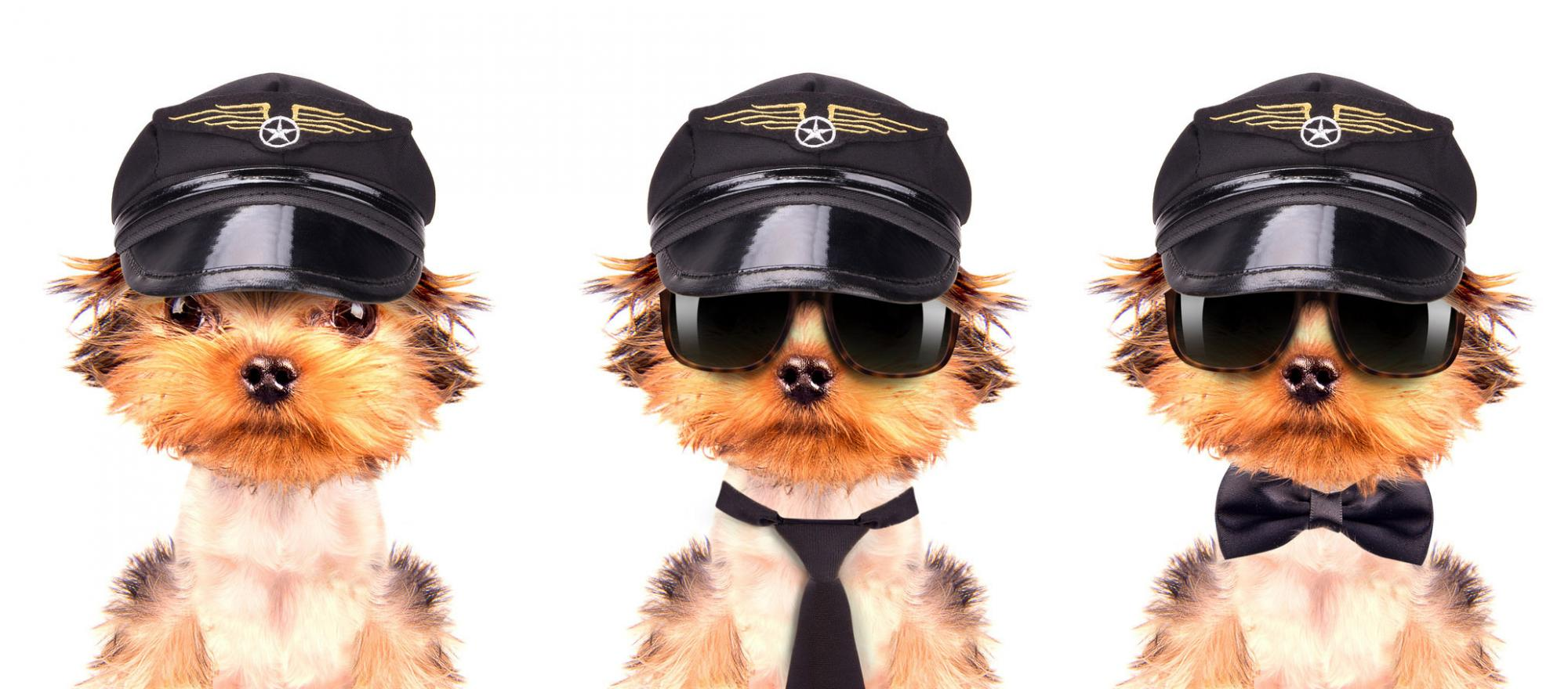 Three dogs with pilot caps.