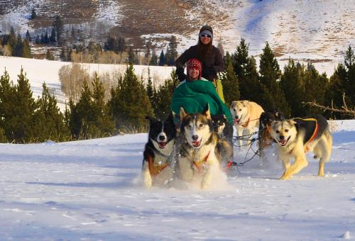 Dogsledding in Yellowstone National Park.